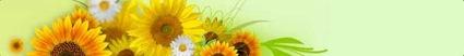 20071223-Sunflower-Ad