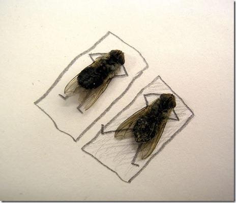 dead-fly-art-09